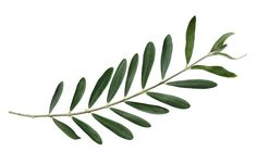 Image result for greek symbol of love