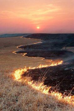 Prairie Fire, Flint Hills, Kansas photo via thehome. Spring is prairie fire season--all the ranchers burn their land to encourage grass to grow. Prairie Fire, Cool Photos, Beautiful Pictures, Flint Hills, Into The Fire, On Fire, Album Photo, Photos Of The Week, Belle Photo