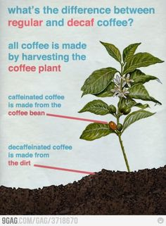bwaha wish I could tell customers this when they ask how decaf coffee is made