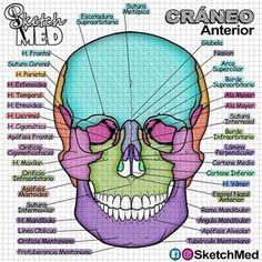 Medicine Notes, Medicine Student, School Kit, Med School, Nursing School Notes, Medical School, Med Student, Student Studying, Hiit Workout Videos