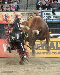 Cowboy Up, Cowboy And Cowgirl, Cowgirl Style, Team Roper, Cow Cat, Bucking Bulls, Rodeo Cowboys, Rodeo Life, Bull Riders