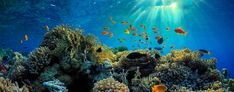 The Great Barrier Reef is one of the world's most important natural wonders, covering more than along the coast … Great Barrier Reef, Marine Life, Natural Wonders, Psalms, Heaven, Earth, Tours, Album, God
