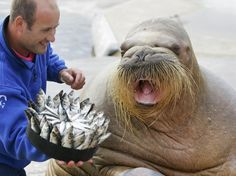 Walrus Birthday Cake