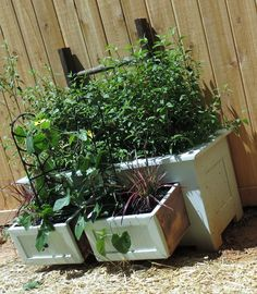 Vintage paintrd bench turned into a container Garden