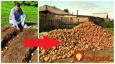 Mnohí si myslia, že sadiť zemiaky koncom leta je bláznovstvo, no vôbec tomu nie je tak. My sa chystáme sadiť túto sobotu a nie je to žiaden pokus. Takto sadíme každý rok, približne v polovici augusta. Sadíme klasicky do zeme, do riadkov po cibuli, takto sme zvyknutí robiť to roky. A vždy máme bohatú úrodu,... Dog Food Recipes, Gardening, Pergola, Landscape, Crafts, Inspiration, Hydroponics, Biblical Inspiration, Manualidades