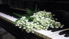 Lily of The Valley flowers on piano keys