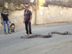 Nothing much bro, just walking the snake