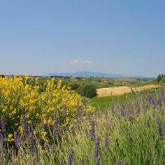Der Lavendel setzt tolle Farbakzente - anders reisen mit ReNatour