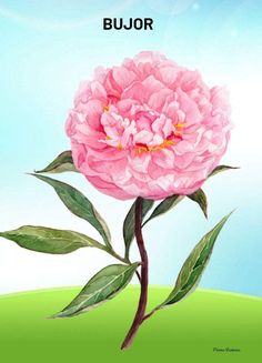 School, Flowers, Plants, Plant, Royal Icing Flowers, Flower, Florals, Floral, Planets