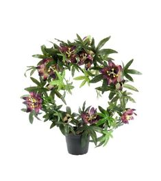 Passer godt for allergikere Floral Wreath, Planters, Wreaths, Home Decor, Decoration Home, Door Wreaths, Room Decor, Plant, Deco Mesh Wreaths