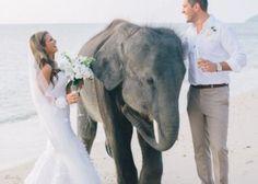 こんな写真も記念になるかも!象さんと一緒のウェディングフォト♡