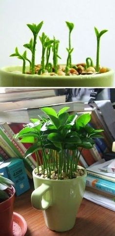 DIY: 10 Pretty free plants for the home. UPcycling Be Green Home Sweet Home Instruction Home Decor Gardening Pot Plant Wa Garden Bulbs, Garden Plants, Indoor Plants, House Plants, Lemon Tree From Seed, Seed Planter, Lemon Plant, How To Grow Lemon, Lemon Seeds