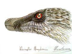 #velociraptor #dinosaur #feathers #feathereddinosaur #raptor #dromaeosaur