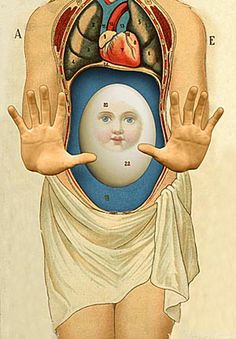 victorian era view of anatomy - with blessed egg