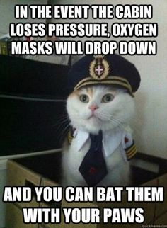 Pilot cat and 20 other funny cat captions check it out