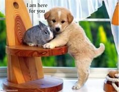 Funny Dogs Wallpaper Black Dog and White Puppies Funny Dog wallpaper Seat Sad Funny Dog Wallpaper both are looking very innocent . Baby Animals Pictures, Cute Animal Pictures, Puppy Pictures, Cute Baby Animals, Funny Animals, Animals Images, Adorable Pictures, Animal Fun, Small Animals