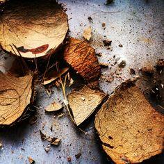 #cocconut