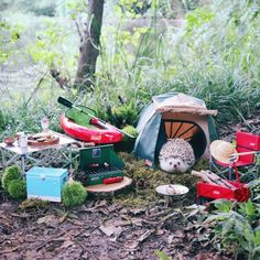 Pygmy Hedgehog Packs His Tiny Bags and Goes Camping in Adorable Photo Shoot Super Cute Animals, Cute Little Animals, Cute Funny Animals, Happy Hedgehog, Cute Hedgehog, Pygmy Hedgehog, Go Camping, Camping Photo, Cute Photos