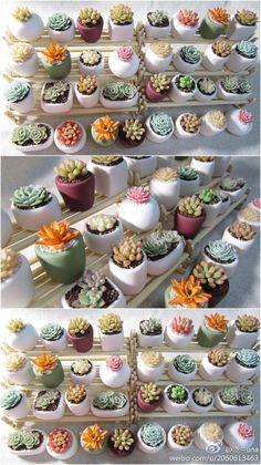 Succulent Arrangements, Cacti And Succulents, Planting Succulents, Cactus Plants, Garden Plants, Indoor Plants, Planting Flowers, Succulent Gardening, Succulent Terrarium