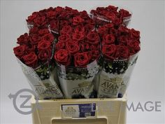 Today in the OZ Export webshop Specials: Rosa gr. Red Naomi, 55 cm, x 60 st. by Van der Meijs.