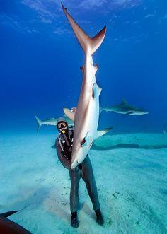 Cristina Zenato, une jeune italienne amoureuse de l'océan, nous montre comment instaurer une relation pacifique entre l'Homme et le requin. Sa méthode est douce et permet d'approcher des squales pour les étudier et mettre en place un système de sauvegarde.