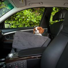 companion dog seat - seatbelt holds it in place and keeps your pup safe.