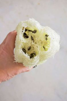 You can grow Luffa sponges right in your own backyard! Luffa vines are finicky but with these few growing tips by the end of the summer you& have loofahs. Organic Gardening, Gardening Tips, Vegetable Gardening, Urban Gardening, Loofah Sponge, Food Photography Tips, Farm Gardens, Garden Seeds, Edible Garden