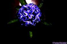 روزنه ديد Vision Slit  ©فرشيد خيرآبادي ©Farsheed Kheirabadi  https://www.facebook.com/Farsheedvard http://pinterest.com/farsheedvard  #عکس #Photography #فرشيدورد