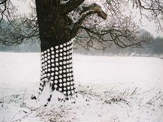 Tim Pugh, environmental artist, UK tree clad in ordered snow