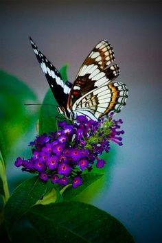 Butterfly bush - lovely scent, plant close to porch or outdoor seating so you can be entertained by all the beautiful butterfies.