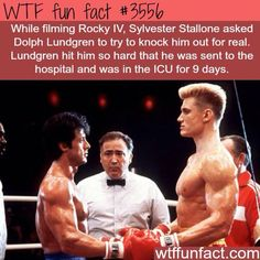 Sylvester Stallone got punched by Dolph Lundgren - WTF fun facts Wtf Fun Facts, True Facts, Funny Facts, Funny Memes, Hilarious, Random Facts, Random Trivia, Crazy Facts, Random Stuff