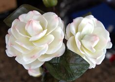 Hand made Camelias Free tutorial in clay