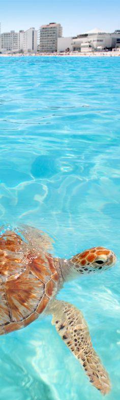 Канкун, Мексика. Подробности: +7 495 9332333, sale@inna.ru, www.inna.ru   Будьте с нами! Открывайте мир с нами! Путешествуйте с нами!