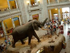 Smithsonian Elephant Rotunda