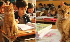 Η σχολική τάξη που υιοθέτησε έναν γάτο Animals, Gatos, Animales, Animaux, Animal, Animais