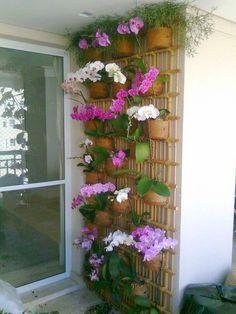 Orchid Flower Arrangements, Orchid Planters, Indoor Orchids, Orchids Garden, Balcony Plants, House Plants Decor, Hanging Flower Baskets, Hanging Orchid, Orchid House