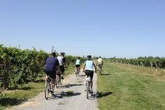 Cycling at Pelee Island Winery