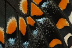 Name that butterfly ...