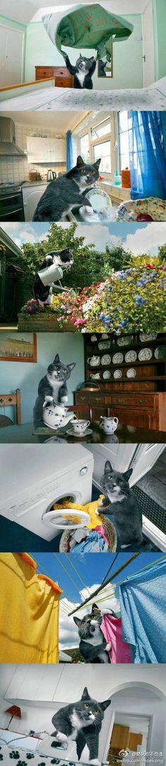 ¡El gato perfecto existe!