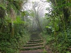 Monte Verde, Costa Rica - Look like an Adventure