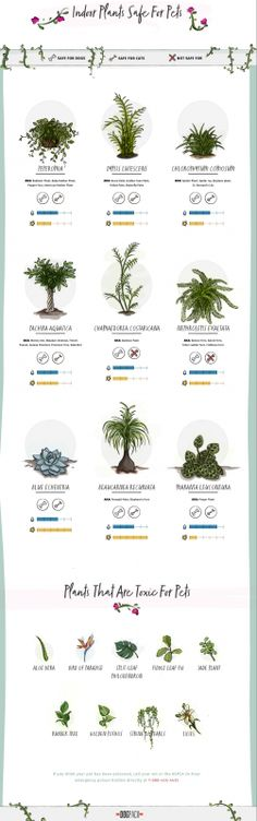 Pet-Friendly Home Decor Tips - Indoor Plants Safe For Pets (And The Toxic Ones To Avoid)