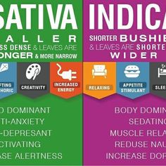 The effects of indicas vs. sativas simplified. Our budtenders are always here to help you identify the right strain to meet your needs. #westcoastcannabisclub #marijuana #cannabis #420 #sativa #indica #infographic #coachellavalley #palmsprings #cathedralcity #mmj