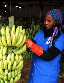 European Union policies block African agricultural exports