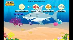 Food Chains and Food Webs (C2, W3)