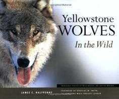 Yellowstone Wolves in the Wild by James C. Halfpenny http://smile.amazon.com/dp/1931832269/ref=cm_sw_r_pi_dp_wuZrub163PYJH