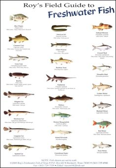 Roy's Field Guides - Birds, fish and sea shells to be found in the Gulf Coast area