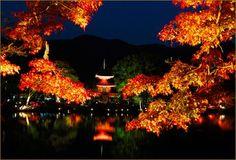 【旧嵯峨御所大覚寺門跡】 場所:京都府京都市 色づき始め:11月中旬~ 真言宗大覚寺派の本山。 夜にはライトアップも行われ観月の名所である大沢池を 取り囲む紅葉の風景は一見の価値あり。