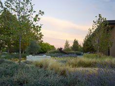 Hall Wines Landscape Design by OJB