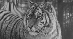 These Original pencil drawings are for sale from Julie Rhodes