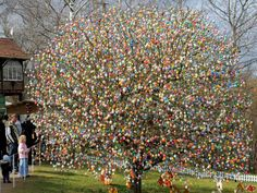 Easter egg tree. Nuts! from http://www.everythingunderthemoon.net/about_me.htm